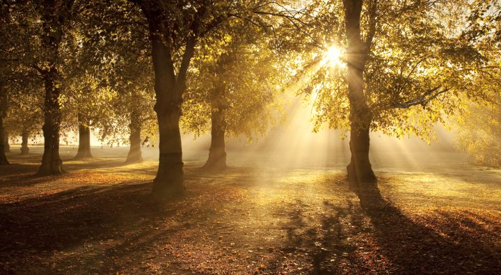 light-rays-clumber-park-87b03eae159ed3465c05a319bc122806