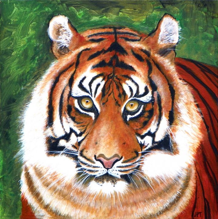 tiger-c30752baa762d863c15627d3ee4e4e2c